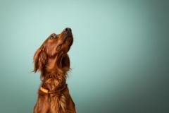 Julie-crenn-photo-chien