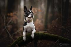 chien-foret-julie-crenn-2