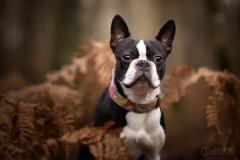 chien-foret-julie-crenn