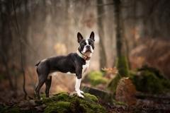 chien-julie-crenn