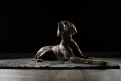 chien-studio-weimar-julie-crenn-2