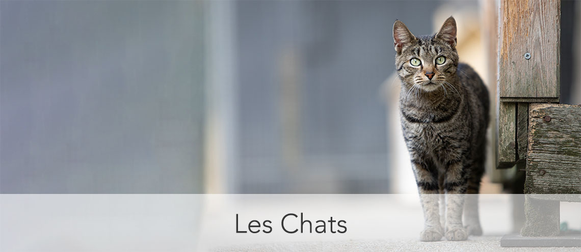 photo chat SPA