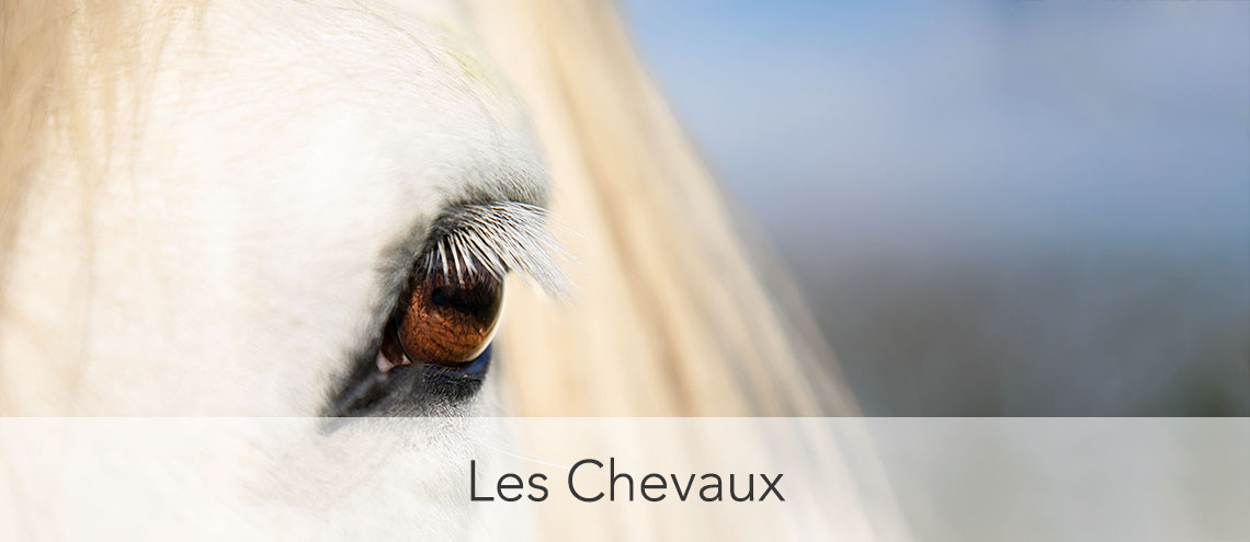 Photo cheval espagnol
