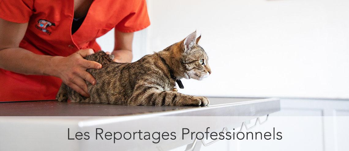 Reportage professionnel ostéopathe chat